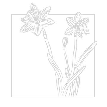 March - Daffodil by maryhorohoe
