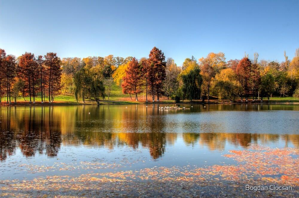 Autumn in tineretului by Bogdan Ciocsan