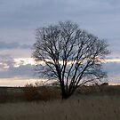 Lonely tree in sunrise by Antanas
