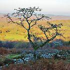 Hundatora-Baum von lezvee