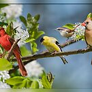 Pretty Little Songbirds Sitting in a Row by Bonnie T.  Barry