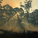 Montagu bushfire , far nor west Tasmania , Australia by phillip wise