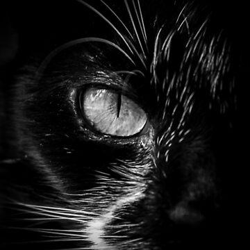 Cats Eye by widdy170