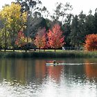 Autumn in Canberra, A.C.T. Australia. by kaysharp