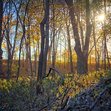 Darkened Yellow Forest by LynyrdSky