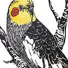 Cockatiel by Karen  Neal