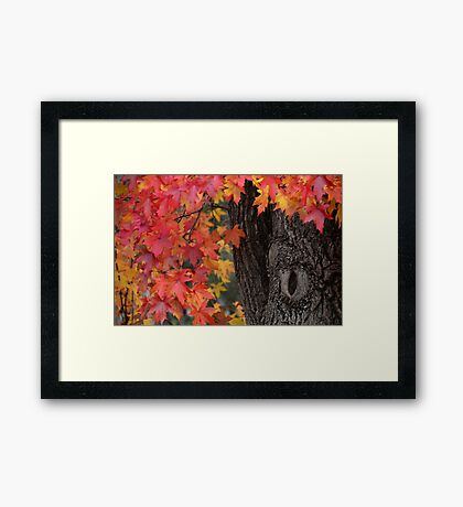 Autumn Blush Framed Print