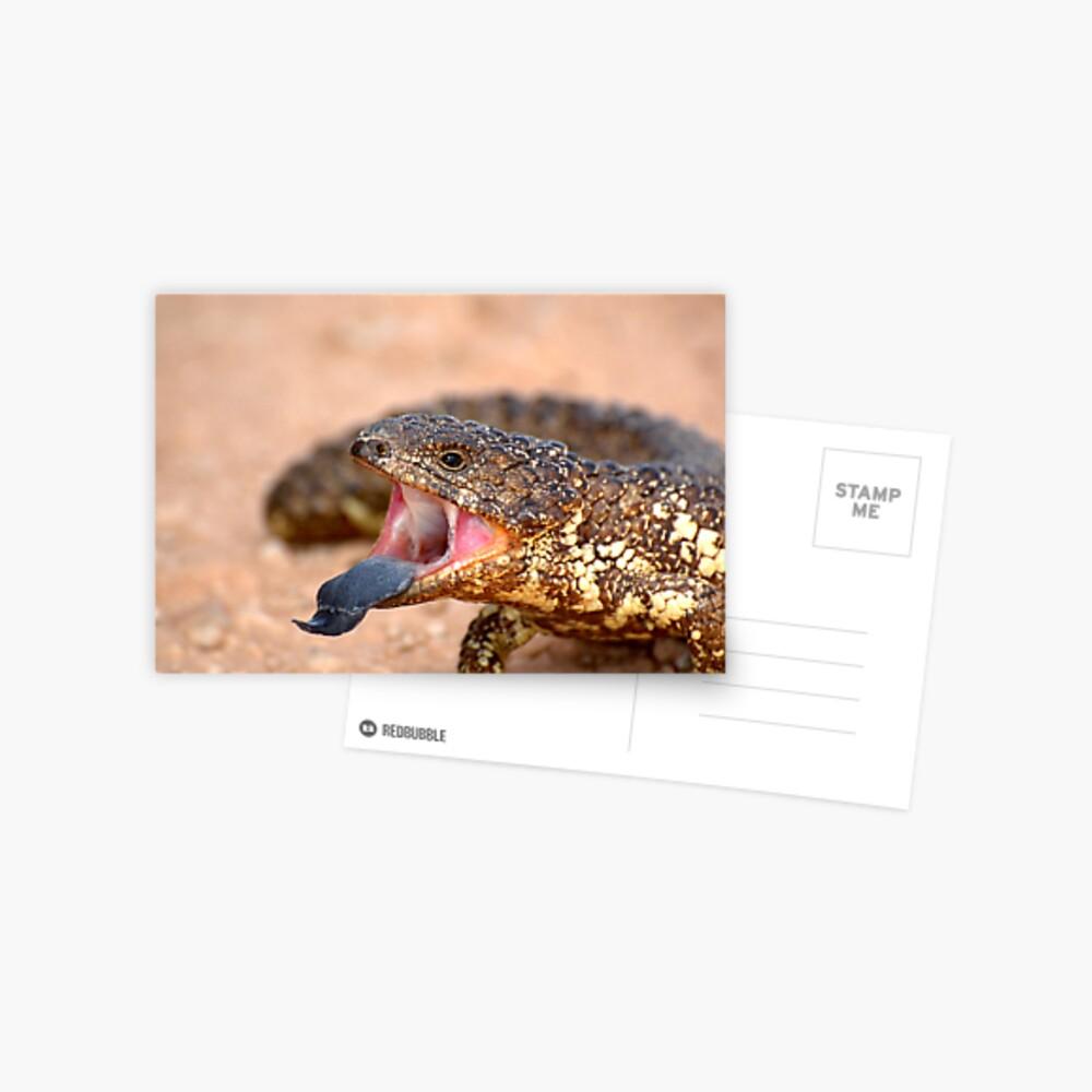 Shingleback Lizard Postcard