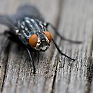 Fly macro by Coreycw