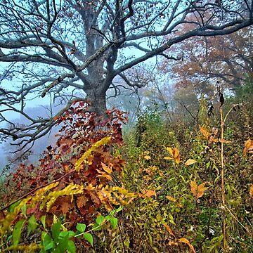 Green Belt Hills by LynyrdSky