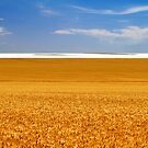 Wheat Field Mirage by JulieM