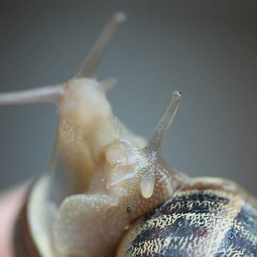Snail Love by jaxfae