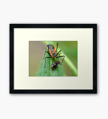 The Prize (best viewed larger)  Framed Print