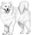 Samoyed by doggyshop