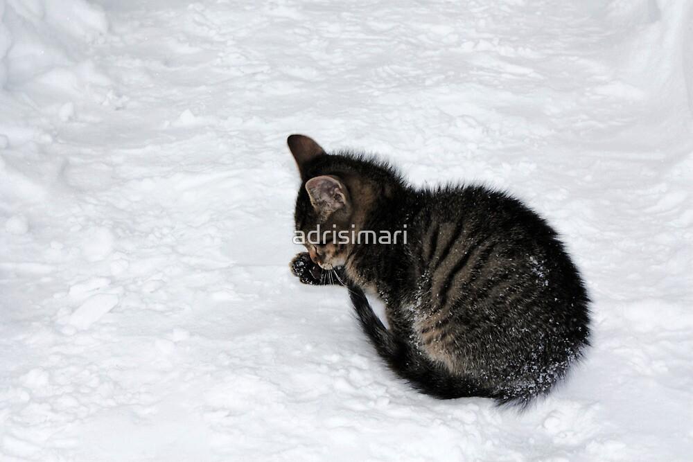 little cat by adrisimari