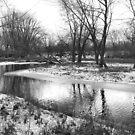 Louisville Swamp, Minnesota by Dan Holtmeyer