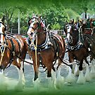 Clydesdales by Dana Yoachum