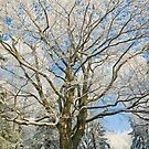 Ancient tree covered by snow by retouch