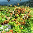 Roan Highlands Butterfly Kisses  by Miles Moody