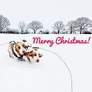 Merry Christmas Basset Hounds! by NrthLondonBoy