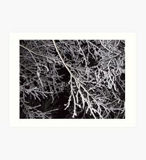 Snow branches Art Print