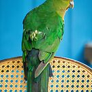 Posing Parrot by WendyJC