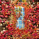 Fall Window by Walter Quirtmair