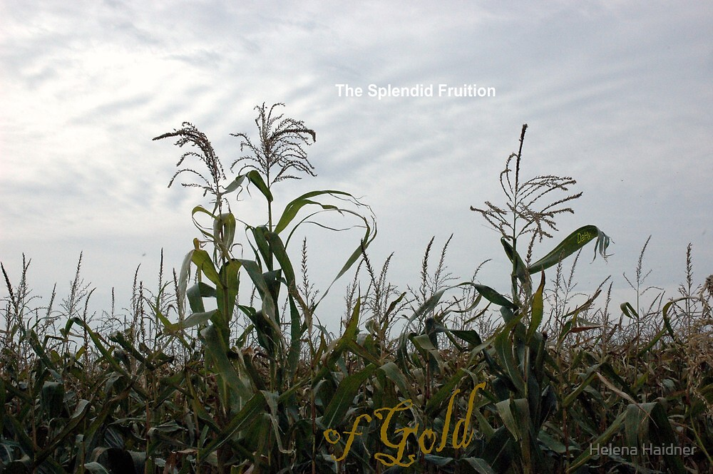 The Splendid Fruition, of Gold by Helena Haidner