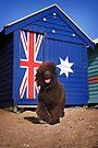 Aussie Irish Water Spaniel by Helen Green
