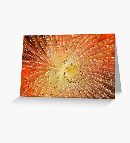 Aquatic Fireworks Greeting Card