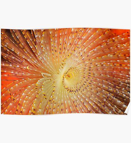 Aquatic Fireworks Poster