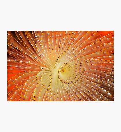 Aquatic Fireworks Photographic Print