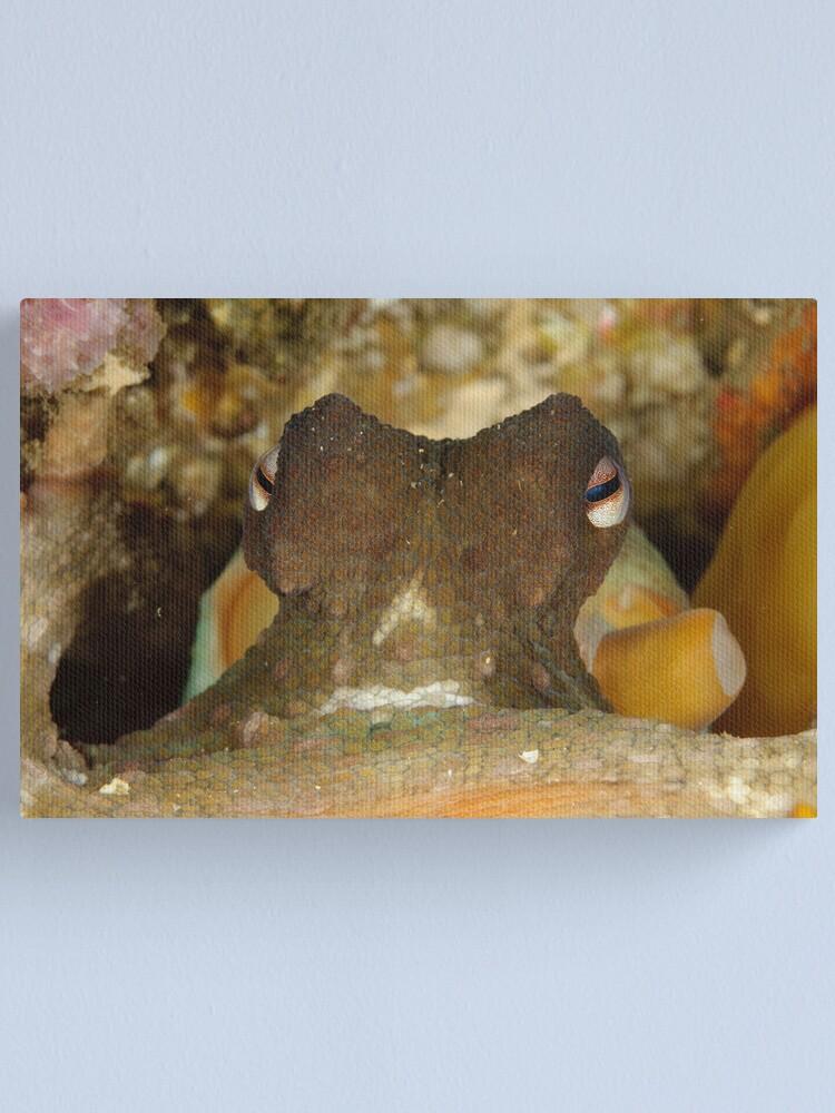 Alternate view of Common Sydney Octopus - Octopus tetricus Canvas Print