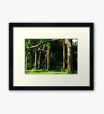 Rainbow Eucalyptus .... Framed Print