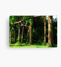 Rainbow Eucalyptus .... Canvas Print