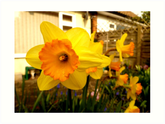Spring Is Here! by Vicki Spindler (VHS Photography)