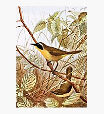 Maryland Yellowthroat Warbler Art Photographic Print