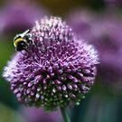 bumblebee deli by dennis william gaylor