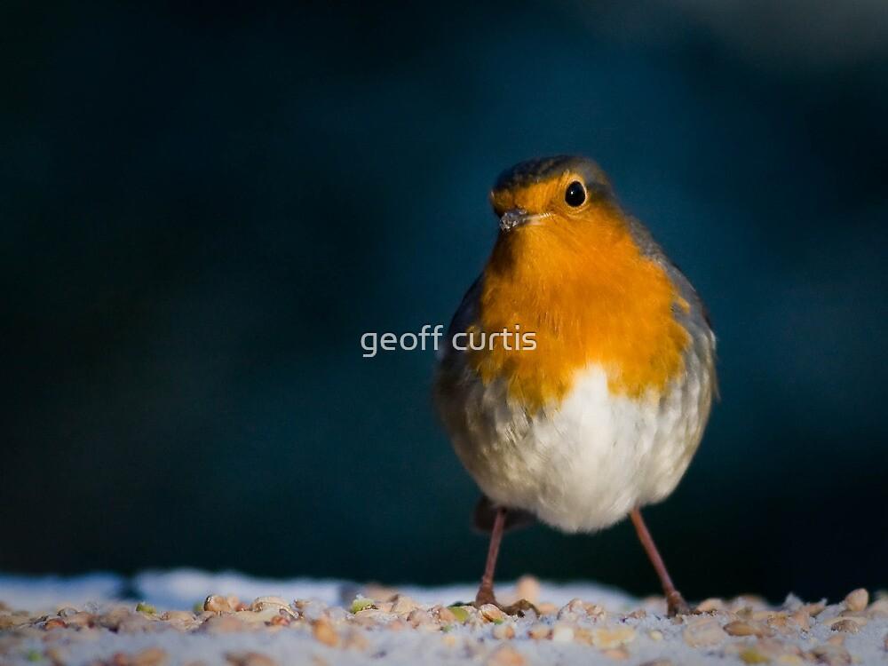 Christmas Robin by geoff curtis