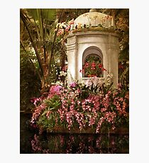Orchid Show Photographic Print