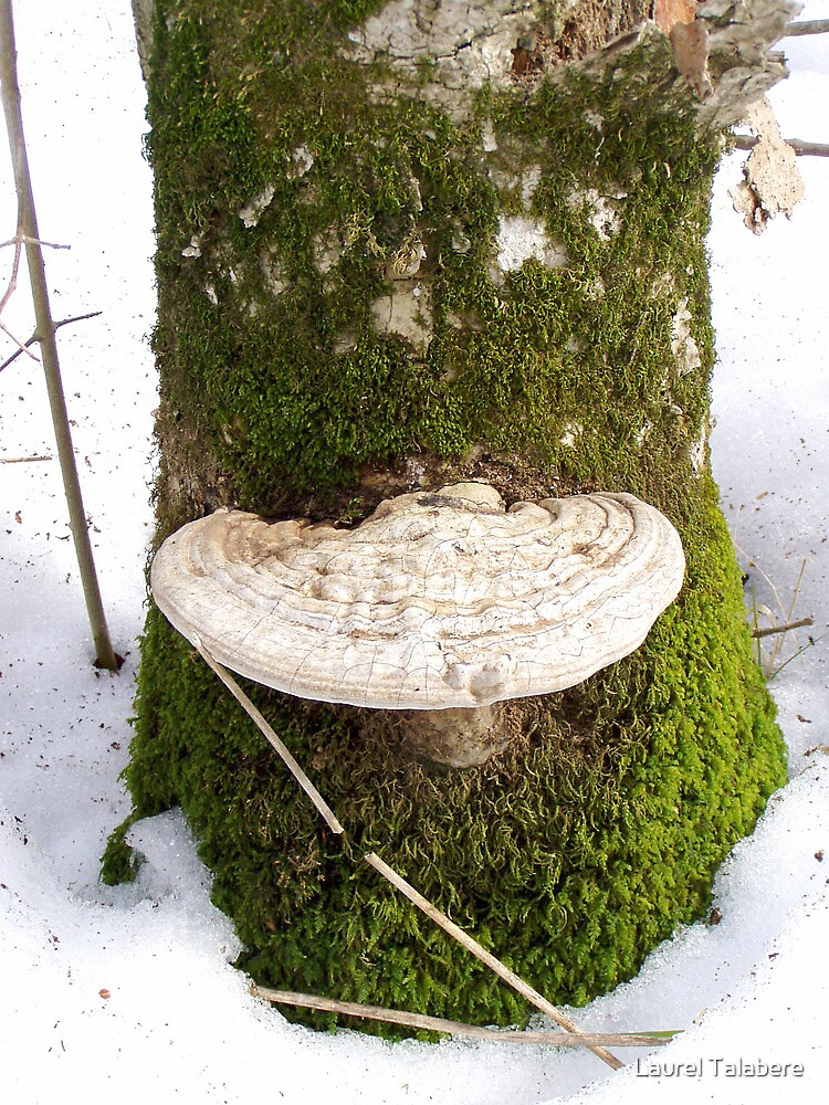 Quot White Fungus On A Mossy Tree Trunk Quot By Laurel Talabere Redbubble