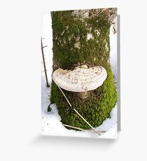 White Fungus on a Mossy Tree Trunk * Greeting Card