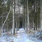 Snow covered woods by setitesuk