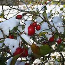 Rosehips in the Snow by setitesuk