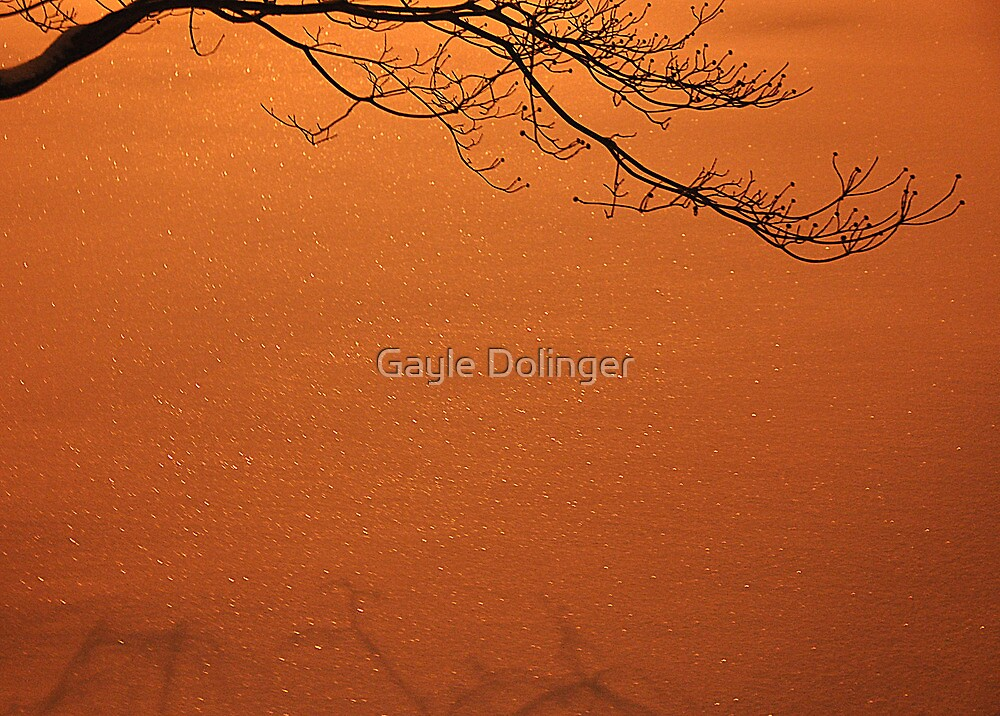 December Snow at Night by Gayle Dolinger