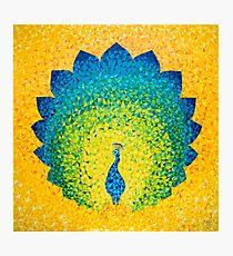 Colorido pavo real solar Lámina fotográfica