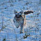 Winter Poppy by Paul Morley