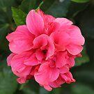 red gumamela (hibiscus) by ANNABEL   S. ALENTON