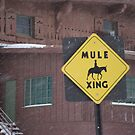 Too Cold for Mules by Susan Russell
