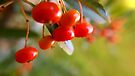 Red berries ready for winter by Themis